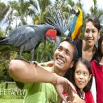 SPECIAL OFFER 2020! Entrance Ticket Bali Bird Park, Get The Tickets Now Only Rp 45,000 Per Pax!!