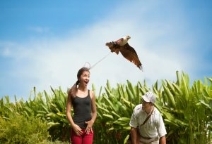Holiday to Bali Bird Park with Family, Enjoy The Excitement of Seeing The Various Birds in Bali