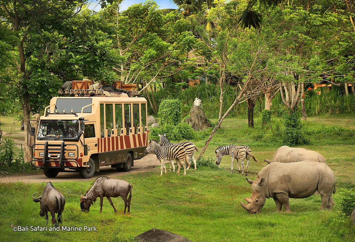 enjoykuta com deal rhino bali safari u0026 marine park for kids