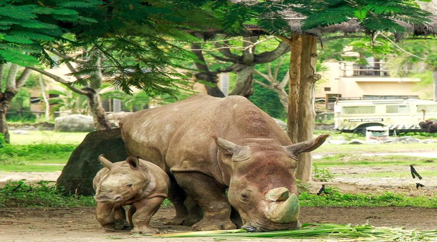 Wow, Get Special Discount For Rhino 4x4 Package at Bali Safari & Marine Park