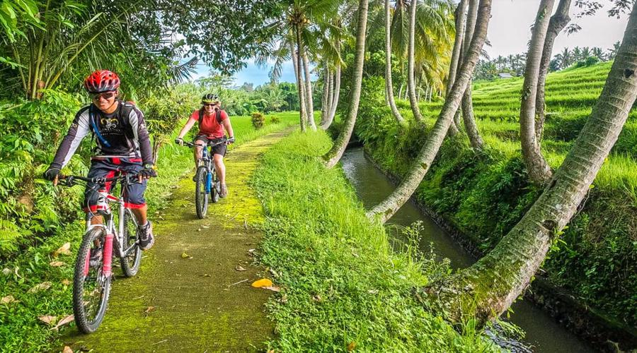 Get Our Special Discount For Kintamani Cycling By Red Paddle Bali Adventures