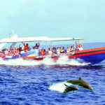 Special Discount Today For Dolphin Cruise Package By Bali Hai Cruises