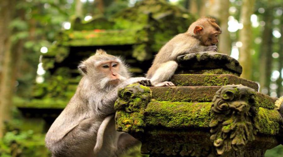 Enjoy The Beauty of Ubud Monkey Forest in Bali