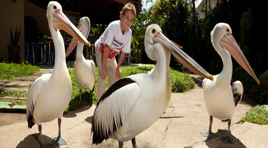 Special Offer for Ticket Bali Bird Park, The Biggest Bird Park in Bali