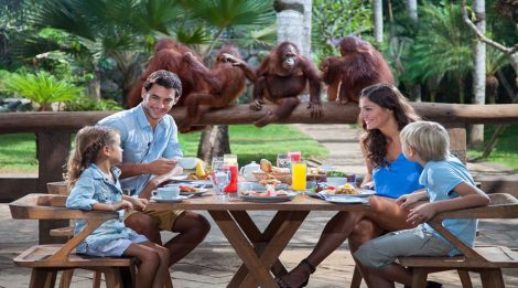 Enjoy Our Special Offer For Breakfast with Orangutan at Bali Zoo, Nice Breakfast With Animals!