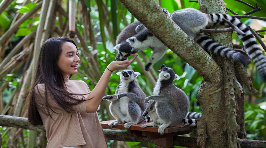 Enjoy Our Special Discount for Zoo Admission Ticket at Bali Zoo