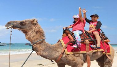 Enjoy Our Special Offer For Bali Sunset Camel Riding at Kelan Beach Jimbaran by Bali Camel Adventure