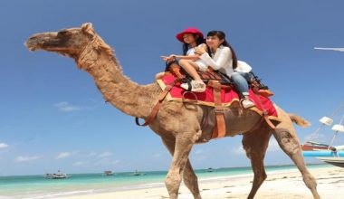 Enjoy Our Special Discount For 30 Minutes Bali Camel Riding at Kelan Beach by Bali Camel Adventure