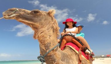 Special Offer For 15 Minutes Bali Camel Riding Package at Kelan Beach Jimbaran By Bali Camel Adventure