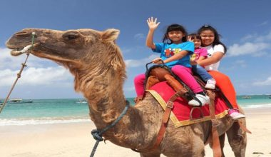 Special Deal For 60 Minutes Bali Camel Riding at Kelan Beach Jimbaran by Bali Camel Adventure
