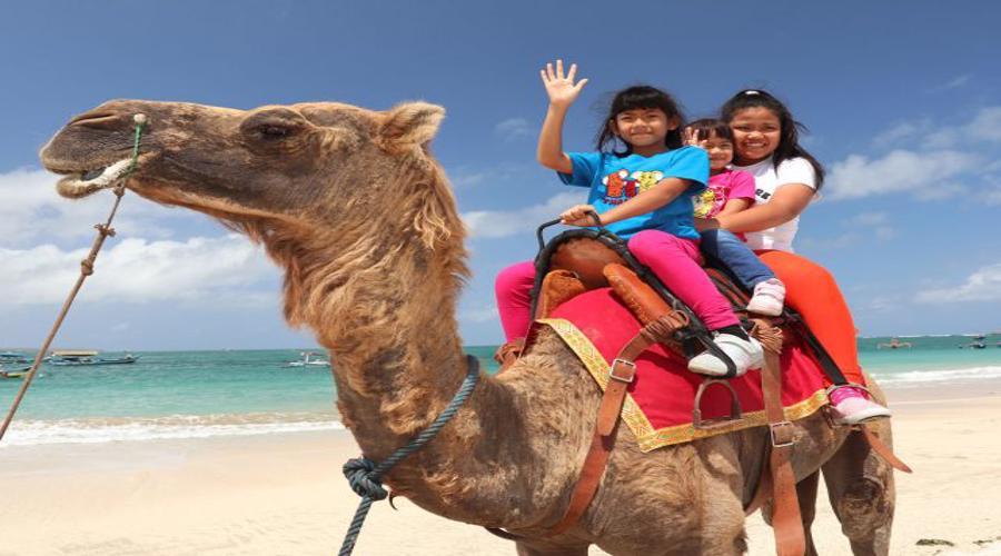 Bali Camel Adventures