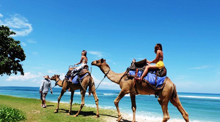 Enjoy Our Special Offer For Safari 2 Camel Riding Package at Hilton Hotel Bali by Bali Camel Safaris