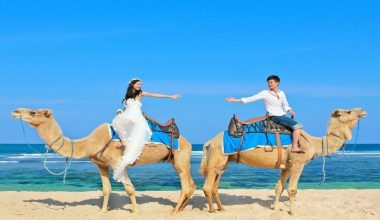 Enjoy Our Special Discount For 60 Minutes Camel Photo Wedding Package at Hilton Hotel Bali by Bali Camel Safaris