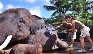 Book Now and Get Special Price!! Jumbo Wash & Jungle Bunggies - 2 Laps by Mason Jungle Buggies Bali