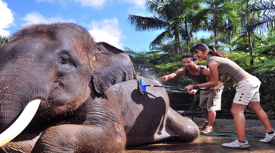 Wow, Enjoy Bathe & Breakfast & Jungle Bunggies - 2 Laps by Mason Jungle Buggies Bali