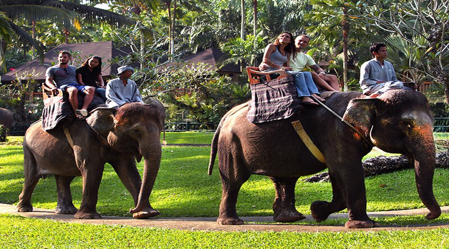 HOT DEAL! Book Elephant Safari Ride & Jungle Bunggies - 2 Laps by Mason Jungle Buggies Bali