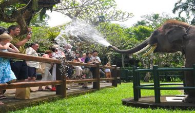 SPECIAL OFFER! Enjoy Elephant Park Visit & Jungle Bunggies - 2 Laps by Mason Jungle Buggies Bali
