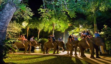 Special Discout Today! Safari Under The Stars By Mason Adventures Bali