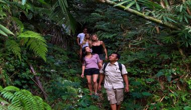 Special Deal Today! Tropical Trekking + Elephant Safari Ride By Mason Adventures Bali