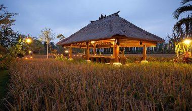 Get Our Special Discount For Lunch and Dinner Package at Bebek Tepi Sawah Restaurant Ubud, Bali