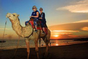 Bali Camel Safaris