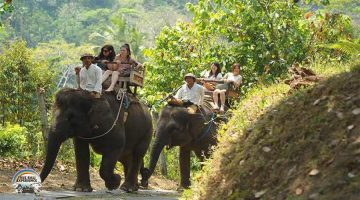 Elephant Ride By True Bali Experience