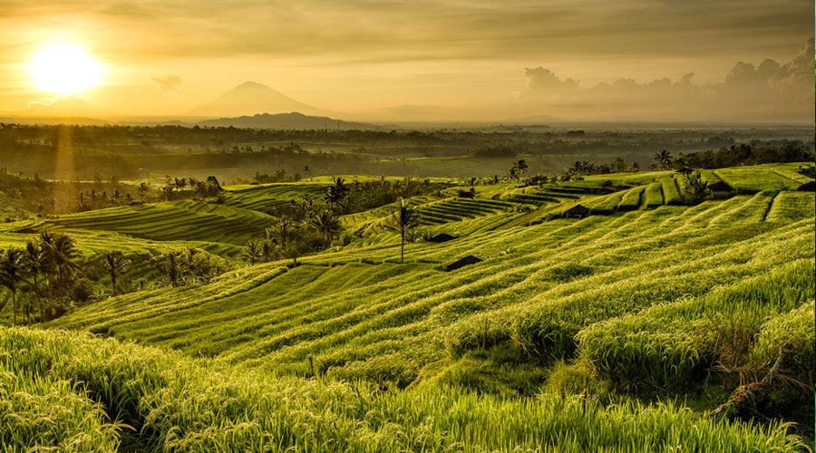 HOT DEAL! Private Full Day Tour; Best UNESCO Sites In Bali!