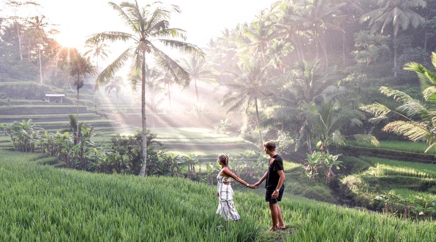 Special Offer! Enjoy Bali Full Day Tour: Highlights of Ubud and Hidden Waterfall