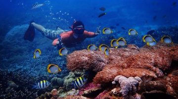 Snorkeling, Island Tour, & Diving By Lembongan Watersport